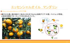 香料講座 天然香料柑橘系の香り