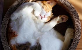 全力応援コース(猫ちゃん10匹の手術代)50000円