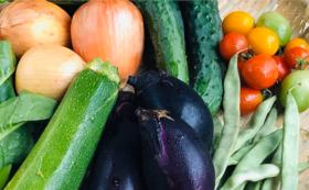 【3ヶ月定期便】農業応援&自然栽培野菜お試しセット スタンダード