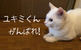 ユキミくんがんばれ!