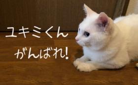 がんばれユキミ!