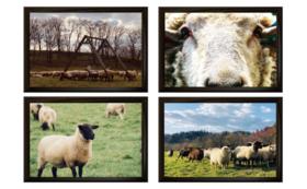 お気持ち支援コース/羊牧場写真A4サイズ フレーム付き