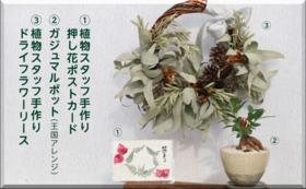 【完売】グッズで応援|植物コースB