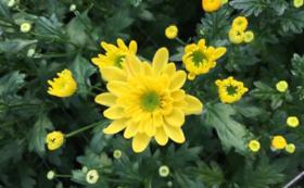 季節のお花セット