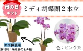 サンクスカード&ミディ胡蝶蘭2本立4号(1鉢)