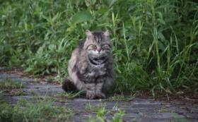 リターン不要(全て猫たちのために使わせてください)1,000円