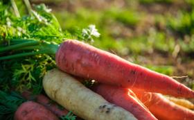 逢瀬町で好きな野菜が作れる券(1回) 付き応援コース♪