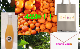 旬の柑橘4種類+温州ミカンジュース+オリジナルトートバック