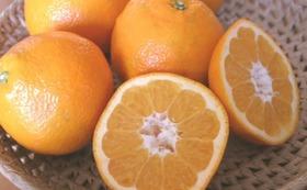 食べて応援!!【新規就農者の柑橘セット】