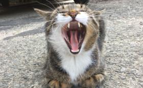 猫パトInstagramアカウント認証コース80000