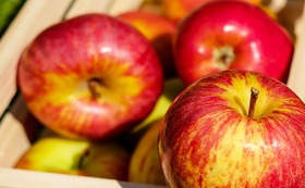 リンゴをあげて応援!