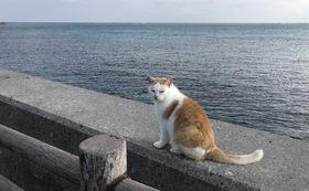 石垣島の猫たちへの応援コース3000