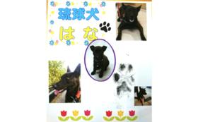 B5|【数量限定!】琉球犬はなの足跡スタンプコース