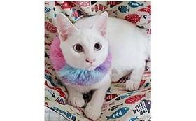 猫ちゃんの写真を添えたサンクスメール