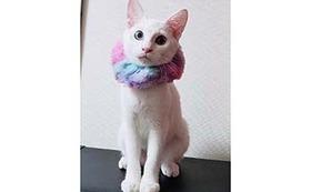 猫ちゃんの写真を添えた感謝のサンクスメール