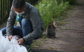 リターン不要(全て猫たちのために使わせてください)3,000円