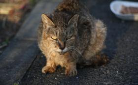 リターン不要(全て猫たちのために使わせてください)10,000円