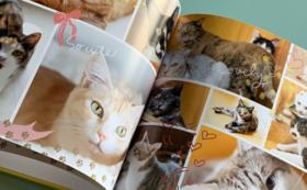 シェルターの猫たちを撮影した特製写真アルバム