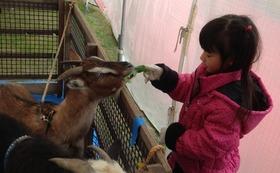 【御越しになれる方向け】動物達へのエサやりを体験できます!