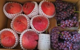 お礼のお手紙+お手製ドライフルーツの特徴やレシピプリント(3種類)