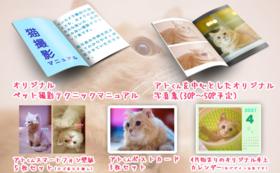 【FIPと闘う猫たち応援コース-20000】