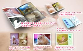 【FIPと闘う猫たち応援コース-50000】