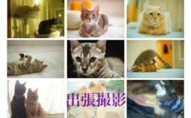 【FIPと闘う猫たち全力応援コース-100000】