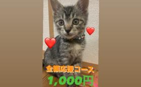 全額応援コース:1000円