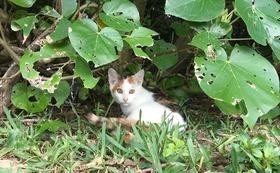 石垣島の猫たちへの応援コース10000