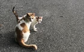 石垣島の猫たちへの応援コース30000