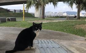 石垣島の猫たちへの応援コース50000