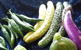 七草農園の野菜セット