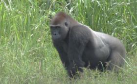 【野生動物を守る仲間】現地と繋ぐオンライン報告会ご招待