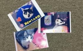 保護猫ポストカード3枚
