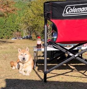 愛犬とゆったりキャンプ