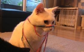 ナッツ応援感謝のメール+猫の写真2枚