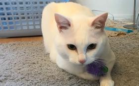 ナッツ応援感謝のメール+猫写真5枚