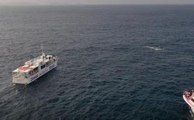 沖縄の海で鯨の親子を空撮するぞ。