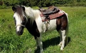 【御越しになれる方向け】ポニーの乗馬を体験できます!