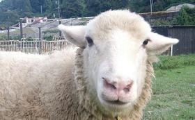 【リターン不要の方向け】動物たちとふれ愛牧場を応援