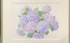 紫陽花(No.032)