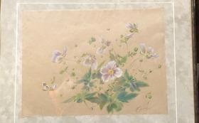 秋明菊(No.073)