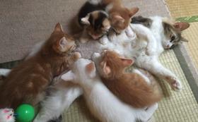 猫たちのポストカードお渡し致します★
