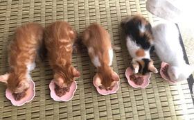 ☆猫たちのポストカードお渡し致します☆