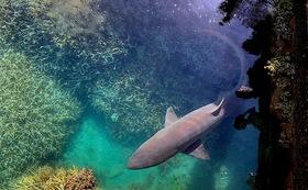 一緒に海を守りたい!海洋ゴミ削減【シロワニ】
