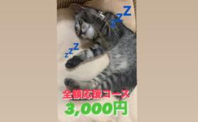 全額応援コース:3,000円