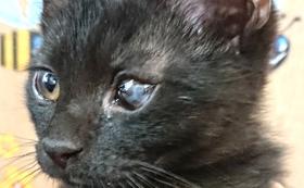 (5,000円)保護仔猫治療費応援コース