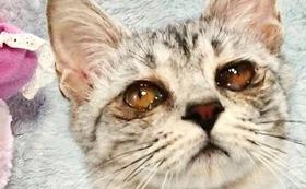 (10,000円)保護仔猫医療費応援Aコース