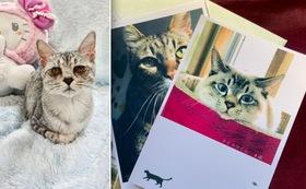 (10,000円)保護仔猫医療費応援Bコース