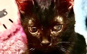 (50,000円)保護仔猫医療費治療費応援Aコース